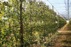 Ovocnářská ožínací lišta Fama CKP 250